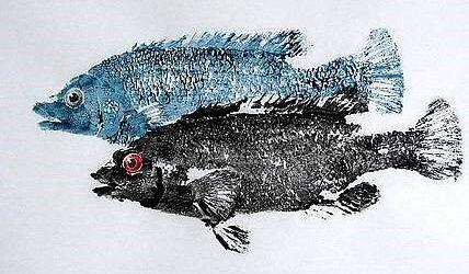 """Museum Saturday GYOTAKU """"FISH RUBBINGS"""" Kids Workshop"""